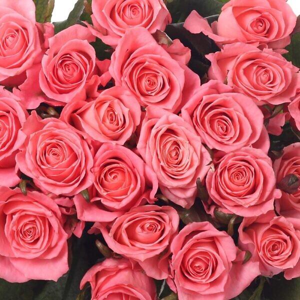 """Розы """"Карина"""""""
