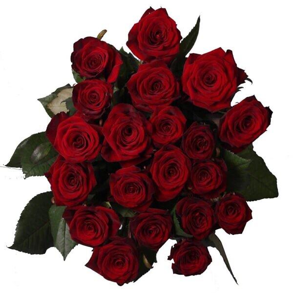 Красные розы поштучно