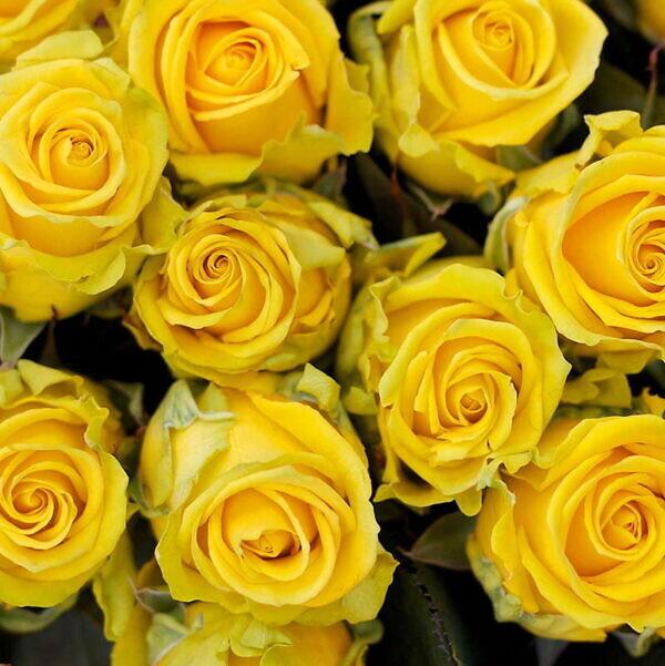роза пенни лейн в букете