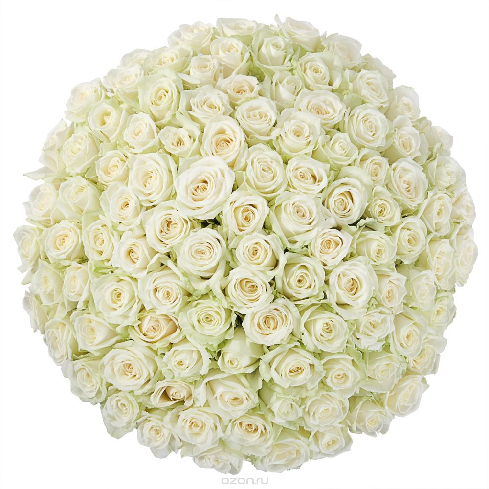 Картинки 101 роза белые, открытки именем